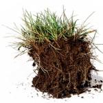 soil clod